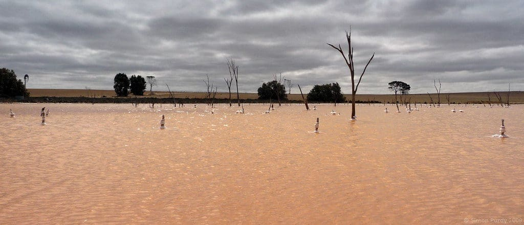 Quairading Pink Lake